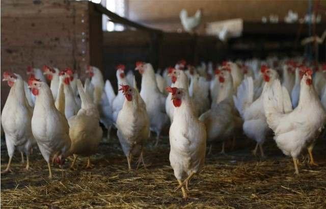 养鸡场燃气热水锅炉项目解决方案